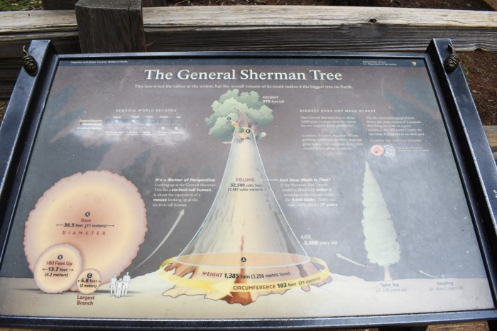 10 Narodny park Sequoia
