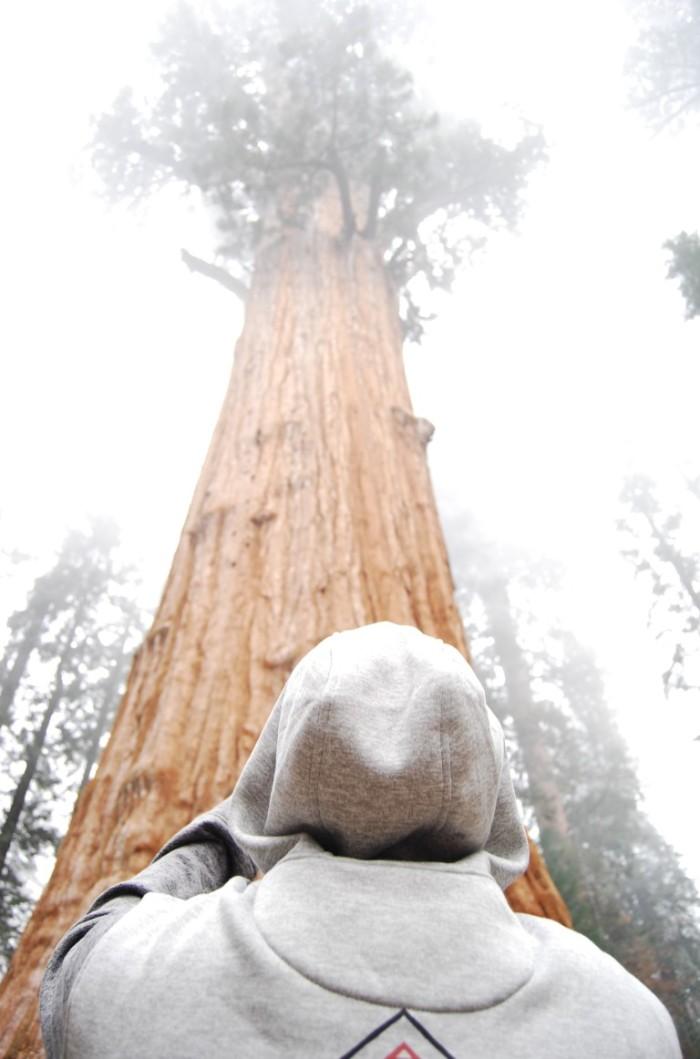 11 Narodny park Sequoia