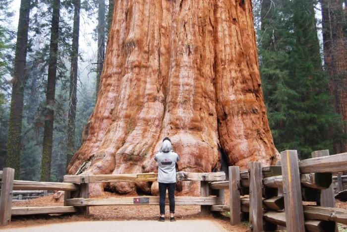 13 Narodny park Sequoia