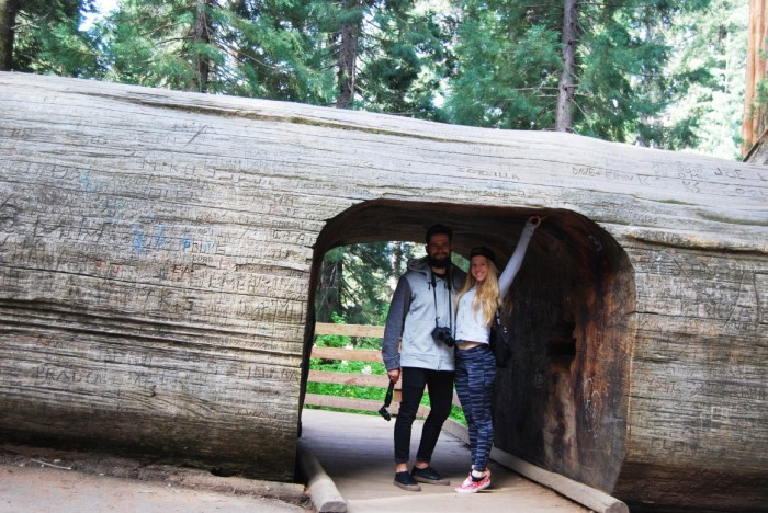 15 Narodny park Sequoia