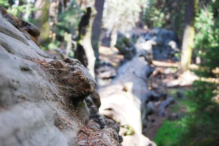 17 Narodny park Sequoia