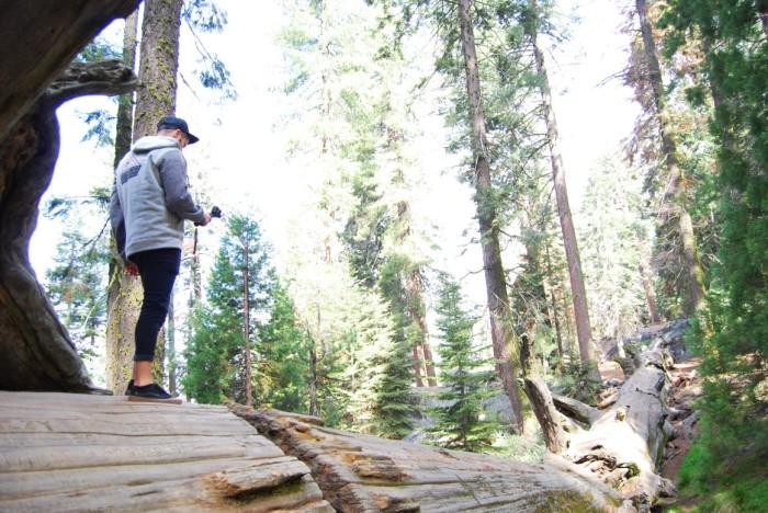 18 Narodny park Sequoia