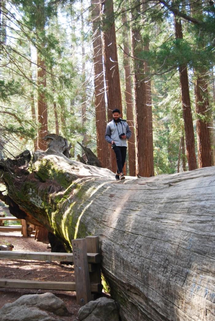 24 Narodny park Sequoia