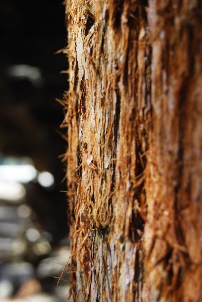 25 Narodny park Sequoia