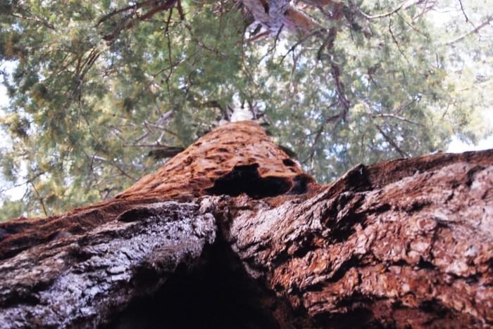 26 Narodny park Sequoia
