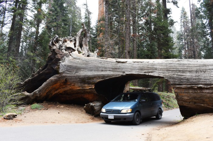 28 Narodny park Sequoia