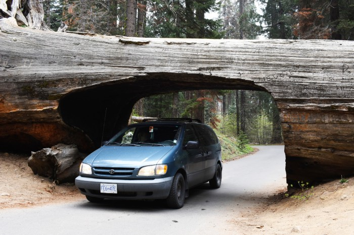 29 Narodny park Sequoia