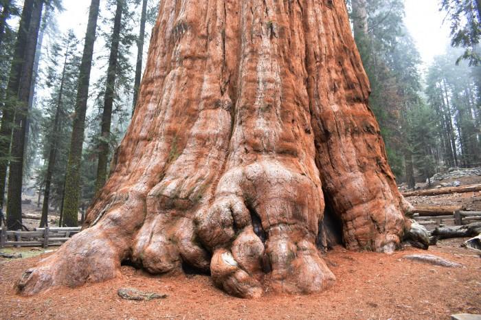 4 Narodny park Sequoia