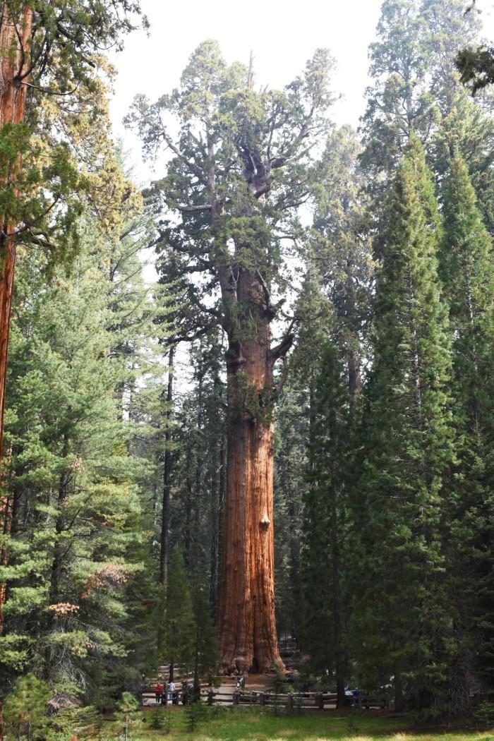 6 Narodny park Sequoia