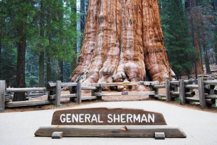 7 Narodny park Sequoia